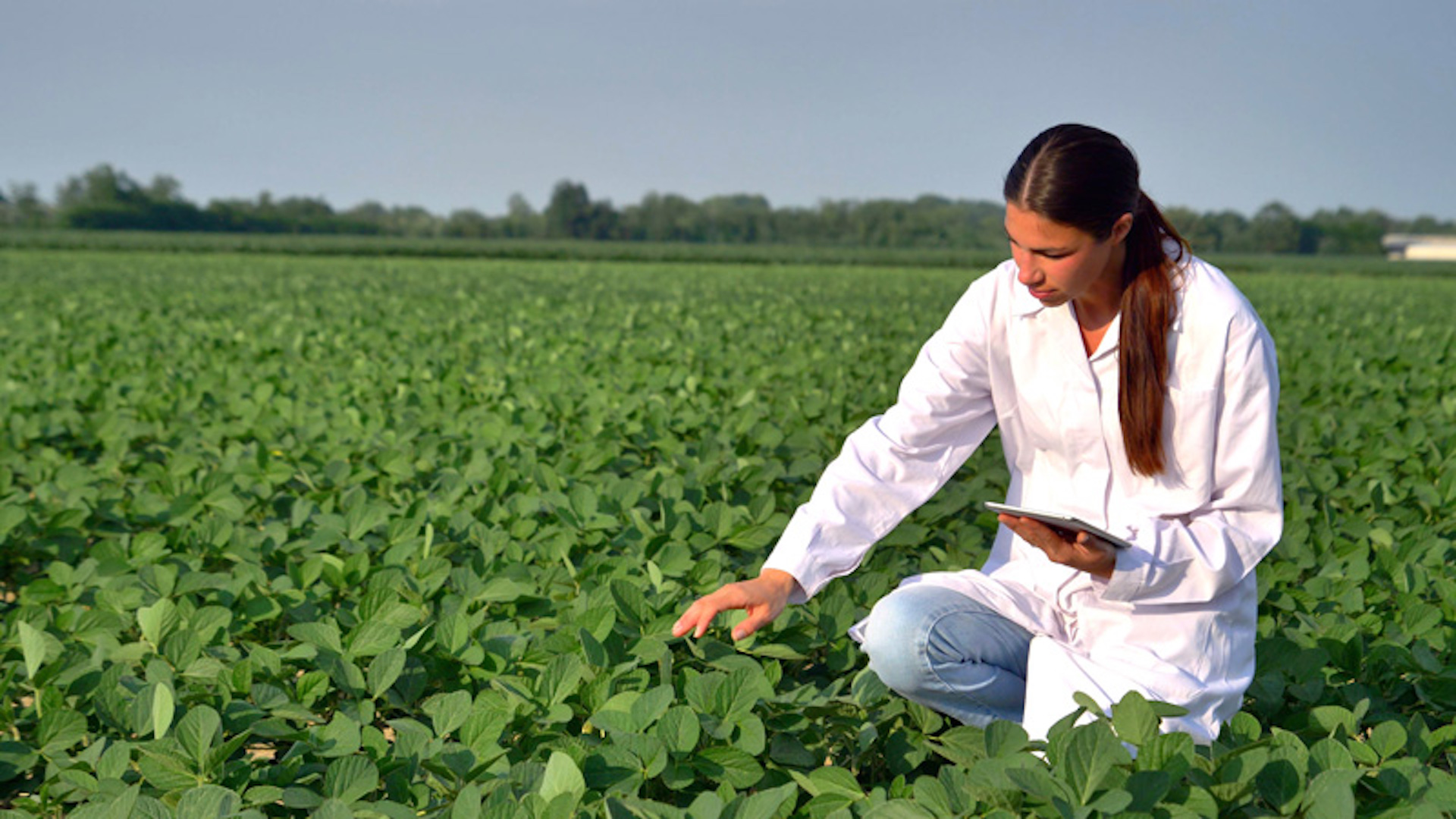 Policy Progress: Draft Law on Import of Innovative Crop Protection Products for State Testing Was Recommended for the First Reading