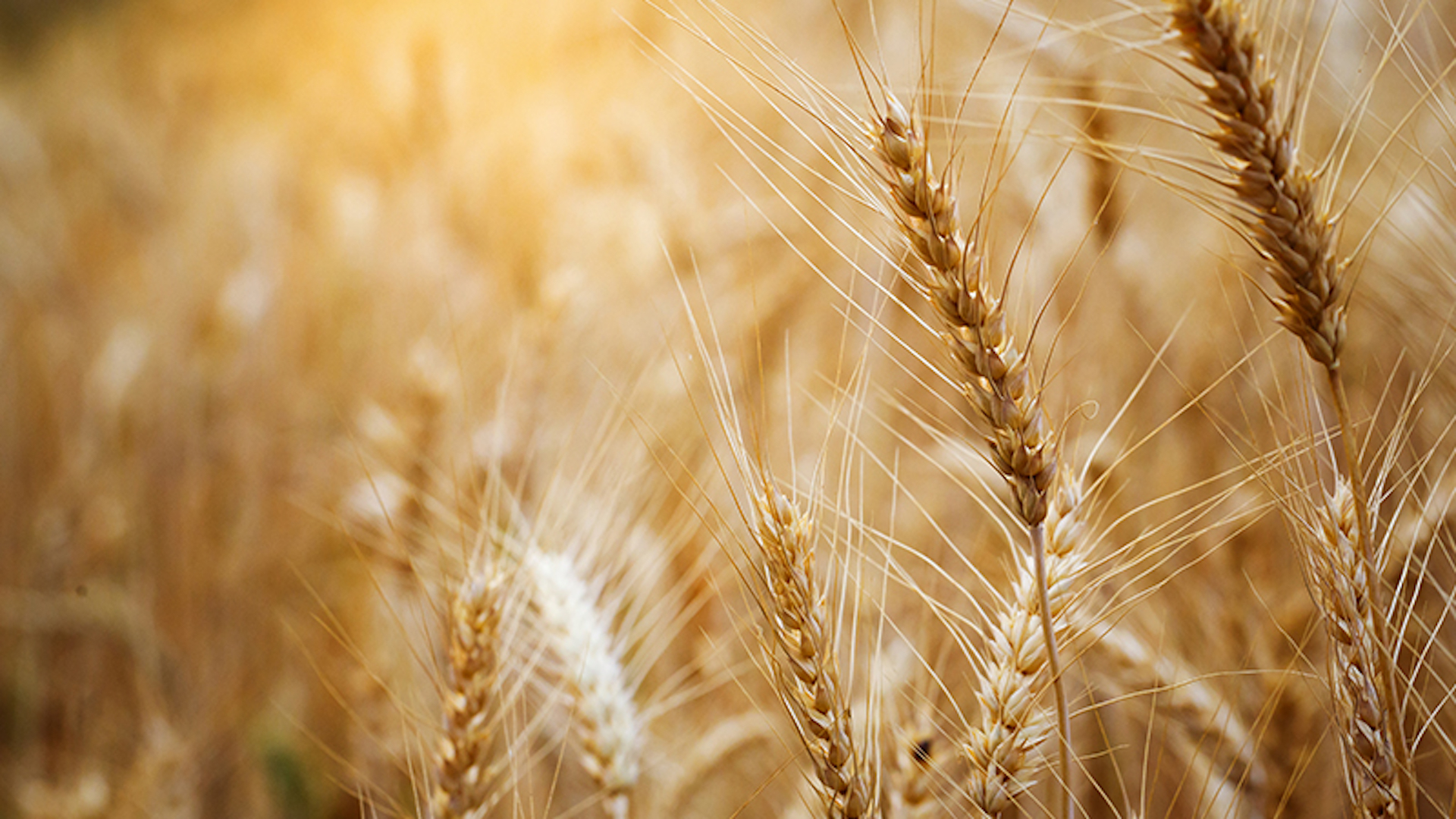 Policy Progress: New Wheat Standard Enters into Force Already in June