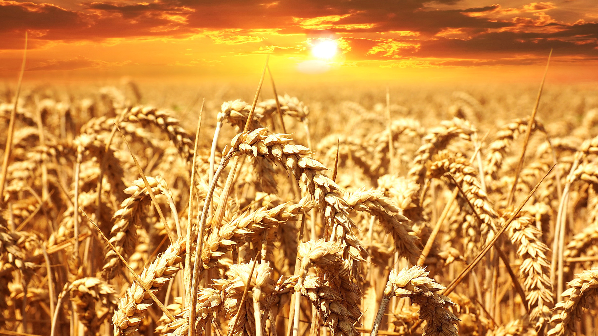 Policy Progress: The Chamber Signed the Memorandum of Understanding on the Grain Market with the Ministry for Development of Economy, Trade and Agriculture